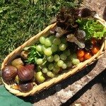 Summer-home-grown-salad-trug-IMG_4522.jpg-rdcd