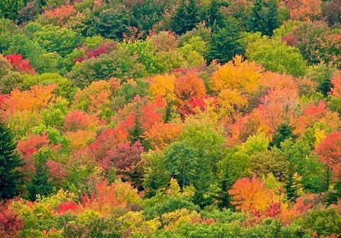 Virginia beautiful;